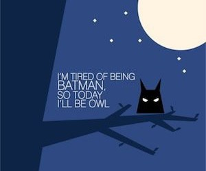batman, owl, and funny image