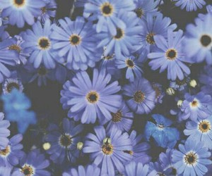 flowers, forget me not, and purple image
