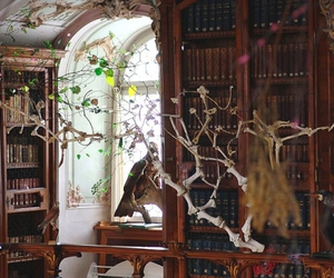 libraries and magical image