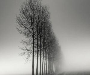 tree, black and white, and nature image