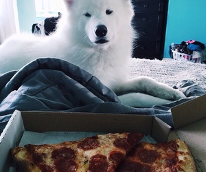 pizza and dog image