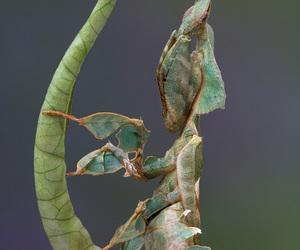 creature, mantis, and insect image