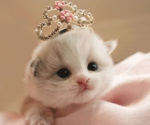 little, kitty, and cute image