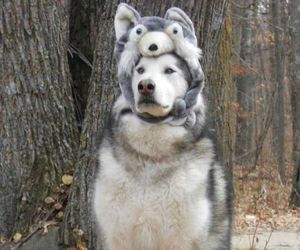 dog, Halloween, and autumn image