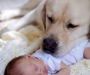 dog, baby, and adorable image