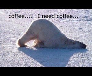 bear, coffee, and lol image