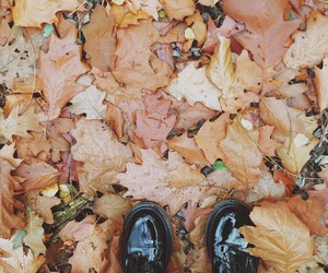 autumn, brogues, and leaves image