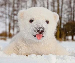 snow, cute, and bear image
