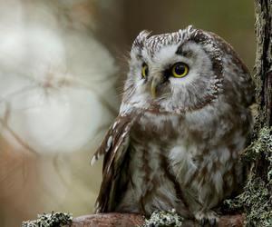beautiful, nature, and owl image