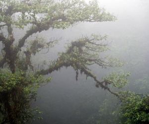 fog, forest, and tree image