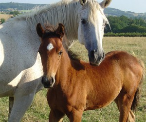Blanc, chevaux, and horses image