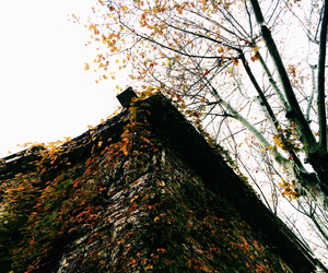 autumn, tree, and vscocam image