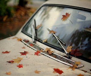 car, autumn, and leaves image