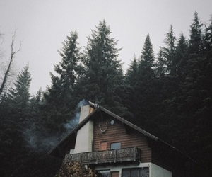 forest, house, and vintage image