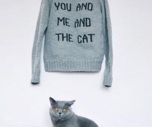 cat, sweater, and cute image