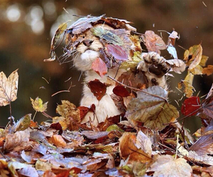 adorable, leaves, and animal image