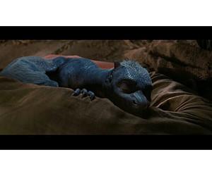 blue, dragon, and eragon image