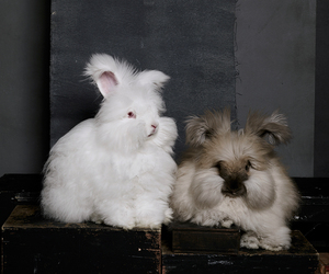 bunnies, cute animals, and rabbits image