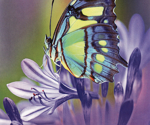 beautiful, photography, and butterfly image