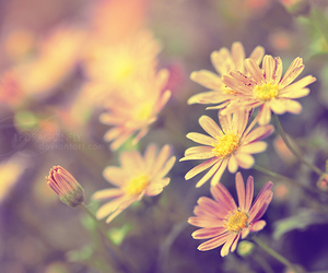 colours, delicate, and vintage image