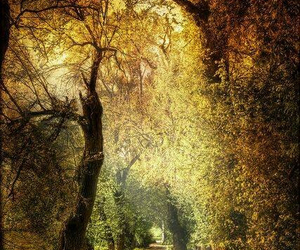 chemin, nature, and life image