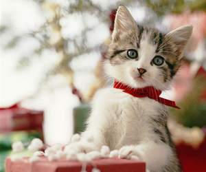 christmas, cat, and gift image