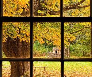 fall, window, and leaves image