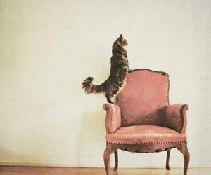 cat, pink, and chair image