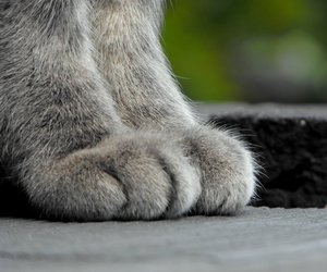 cat, cats, and feet image