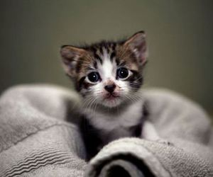 adorable, kitten, and little image