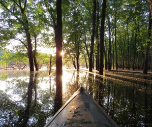 nature, boat, and forrest image