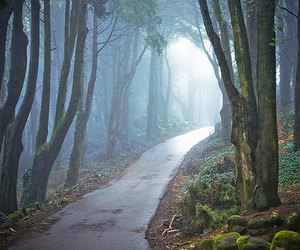 forest, tree, and path image