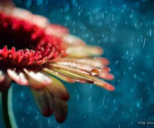 rain, beautiful, and flower image