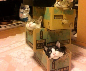 boxes, cat, and cats image