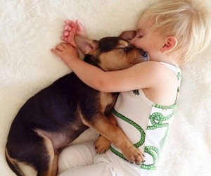 animals, puppy, and cute image