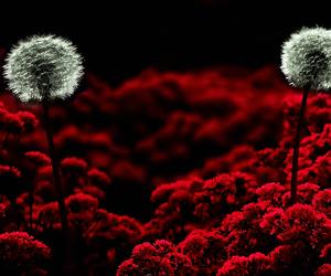 macro, photo, and plants image