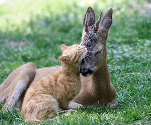 cat, animal, and deer image