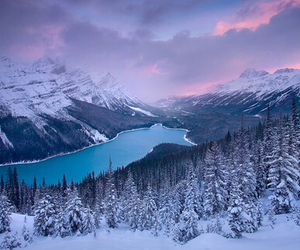 beautiful, snow, and nature image