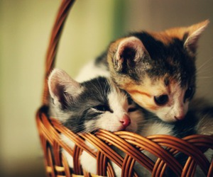 adorable, basket, and cats image