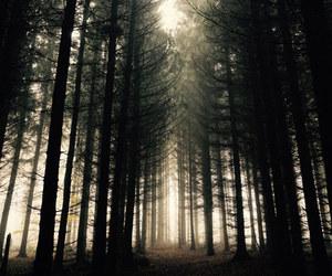 dark, grunge, and trees image