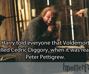 cedric diggory and harry potter facts image