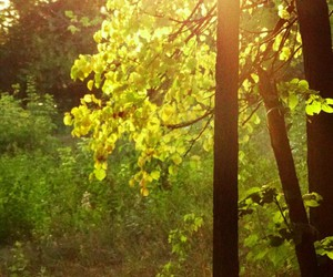 day, forest, and yellow image
