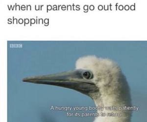 funny, food, and bird image