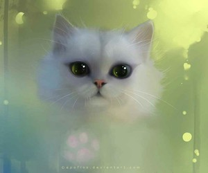 cat, white, and apofiss image