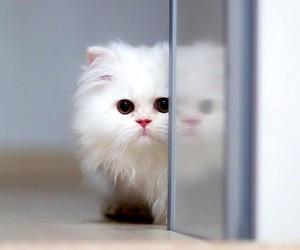cat, kitty, and sad image