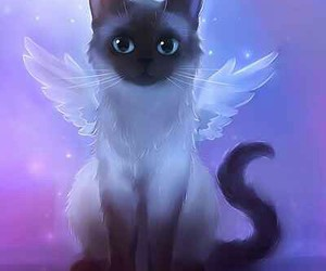angel, apofiss, and cat image