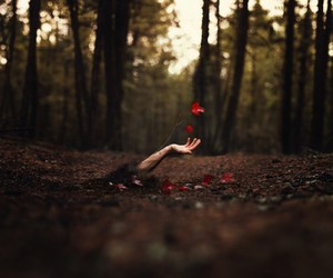 hand, flowers, and nature image