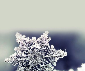 ice, snowflake, and winter image