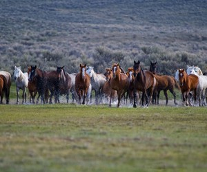 beautiful, herd, and horse image