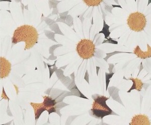 daisy, favorite, and white image